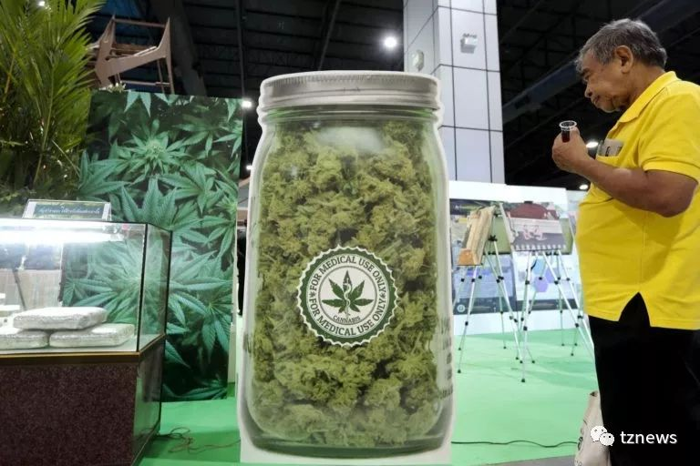 大麻成为泰国新经济作物还面临诸多挑战