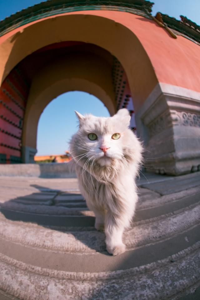 """摄影师6年拍出4万张治愈吸猫图,那张""""撒尿大片""""亮了"""