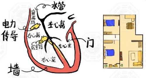 简述肌肉收缩和舒张的原理_肌肉的收缩和舒张