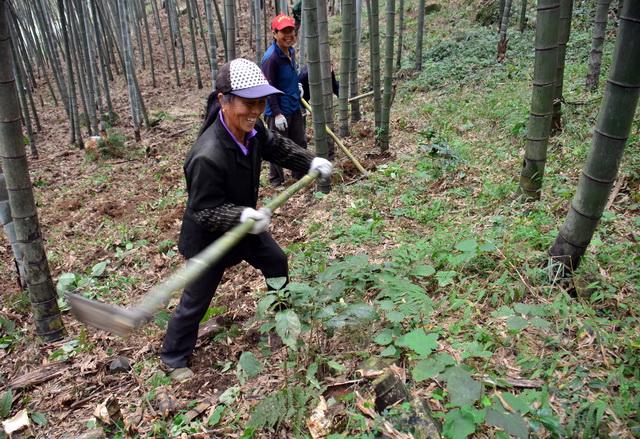 国家林草局:放活集体林地经营权,鼓励社会资本参与