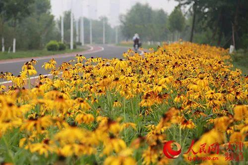 天津首批2个国家湿地公园!武清这个公园上榜!