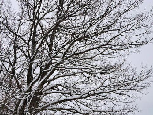 判了!贵州77岁老人劝阻男子折树枝遭殴打后猝死