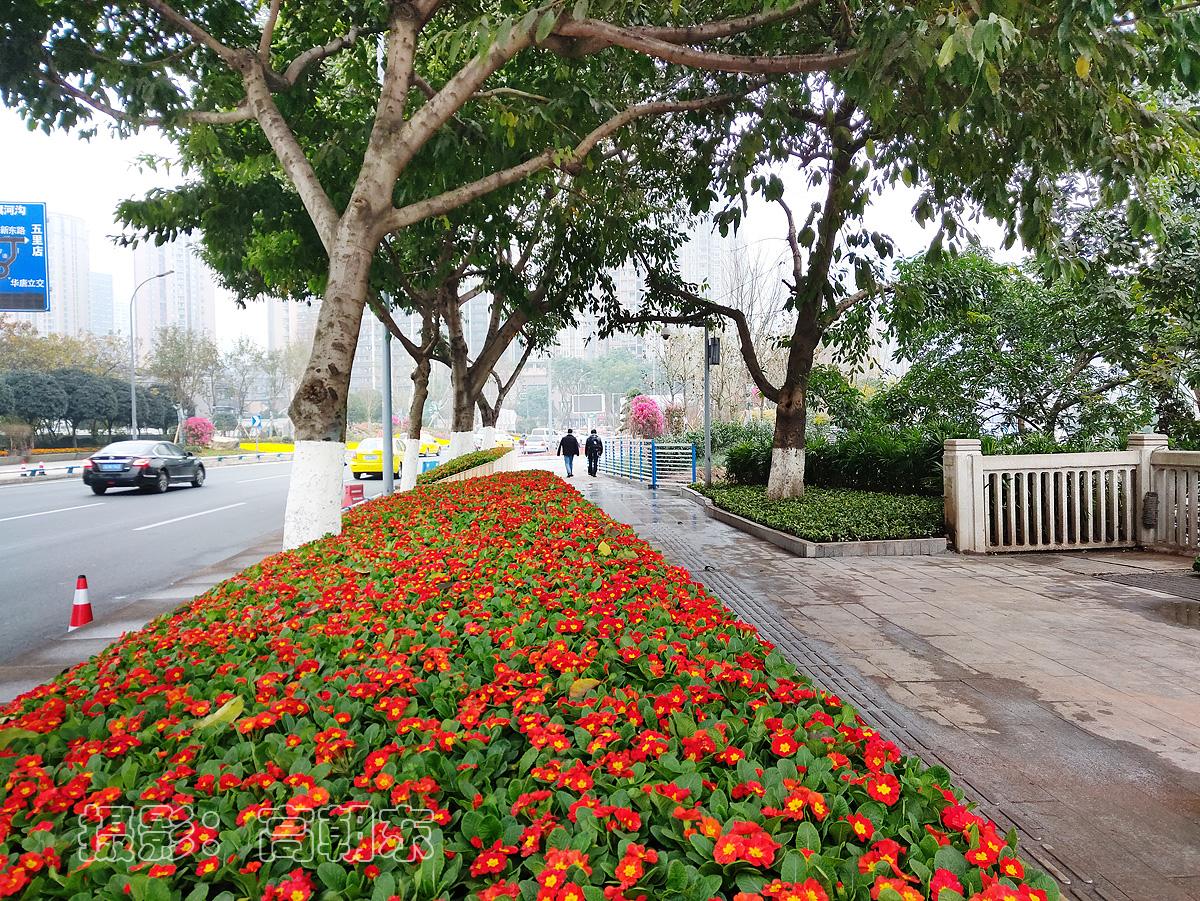 <b>【先睹为快】岁末最后一天,重庆嘉陵江大桥江北桥头新增一处街头花园</b>