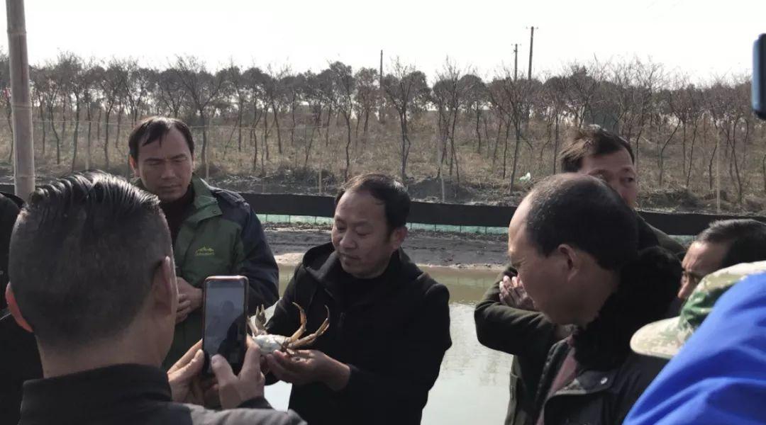 数百人现场见证瑞沣蟹苗生产!2020年,他们更注重大闸蟹的品质和规格!