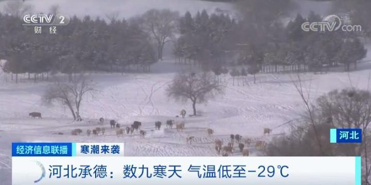 """太?!冷?!了?!棉裤预警拉响:直降20 ℃,多地""""速冻"""