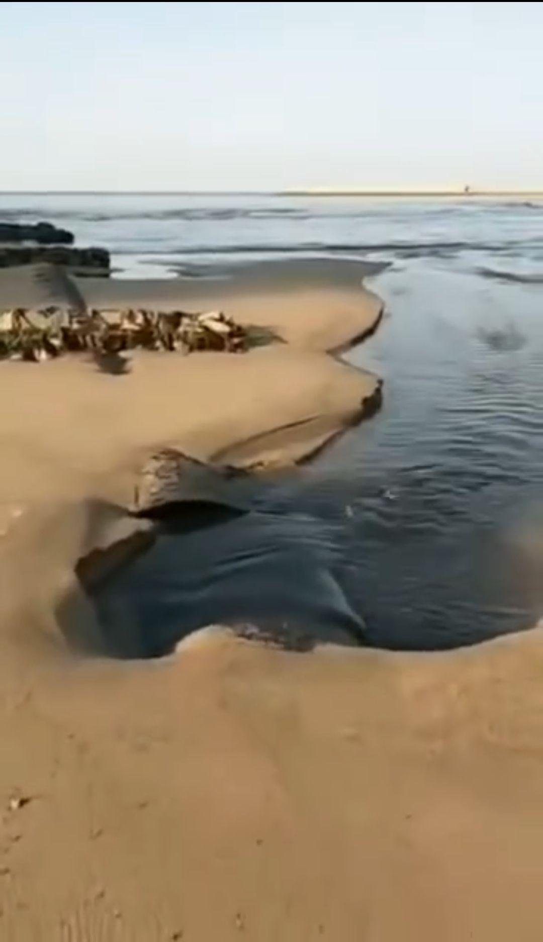 山东龙口废弃管道污水排入大海