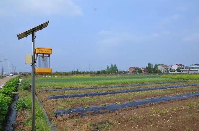 菜吧:不用化肥农药,真的能种出来蔬菜吗?看完你就知道了