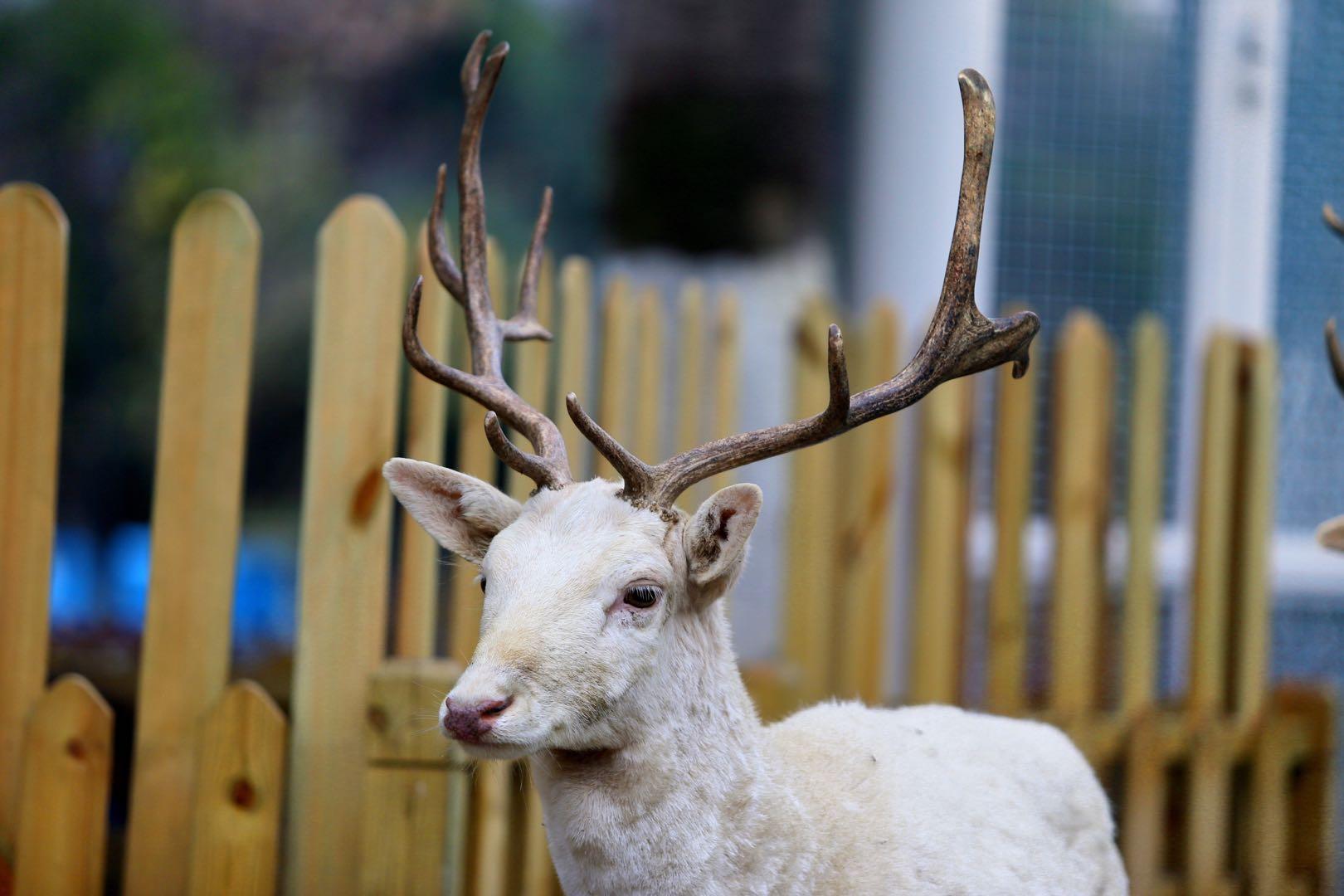 动物穿新衣、组cp入驻新家武汉海昌极地海洋公园