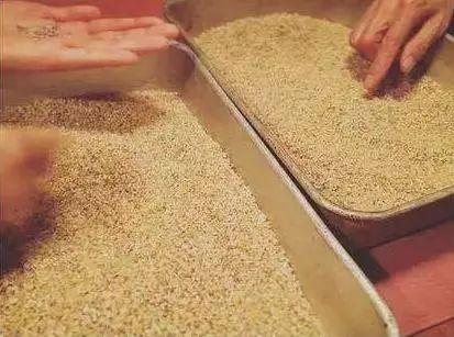 软糯可口的三色糙米,它能让你爱上吃粗粮,愉快下咽!