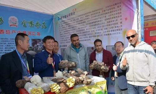 西峡县军马河镇:香菇专列首发