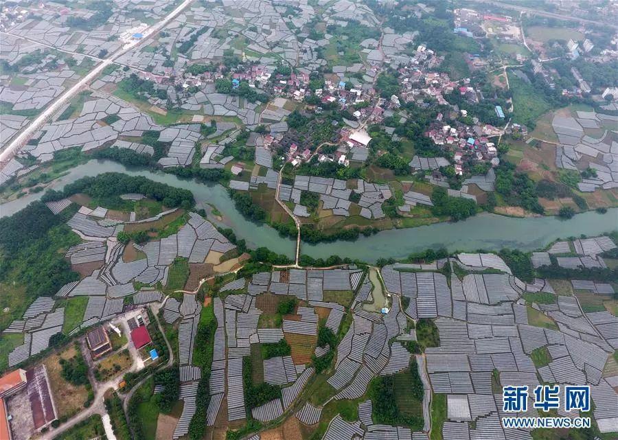 玉林城西莲塘村人口_广西玉林城西二中图片