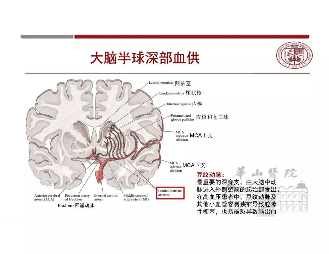 【左,右两大脑半球的功能有何特点?】作业帮