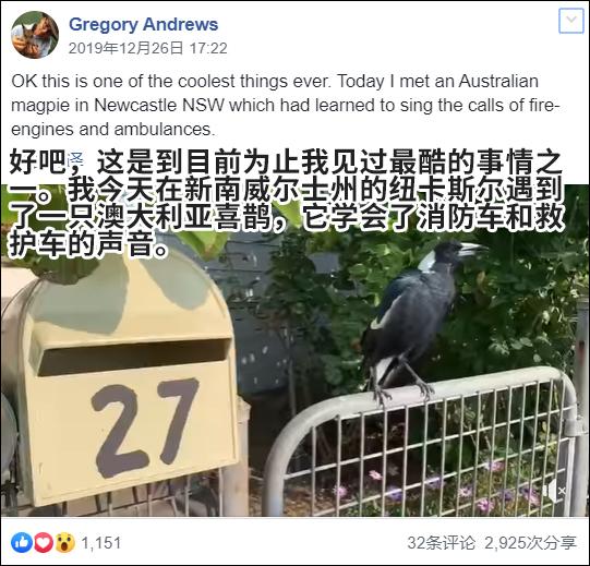 野火連三月,澳大利亞的鳥開始學消防車叫了……