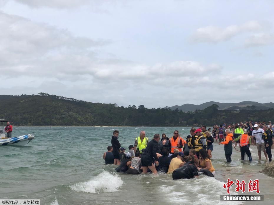 宋祖英儿子照片鲸鱼集体搁浅新西兰