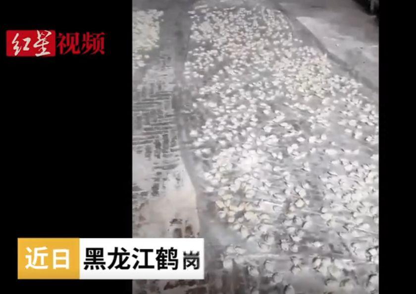 江苏建筑网近万个饺子摆院子里速冻!网友:大户人家拉仇恨