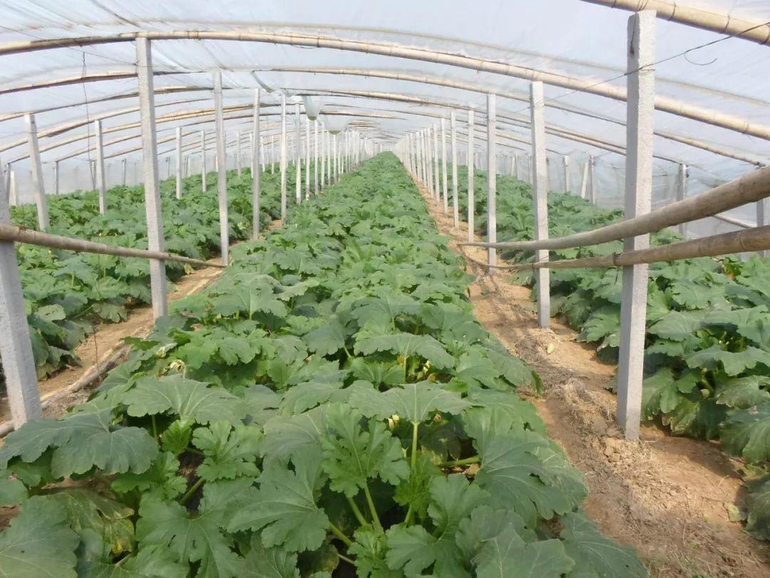 一亩地的蔬菜大棚种植利润和成本是多少_371种养致富网_农村...