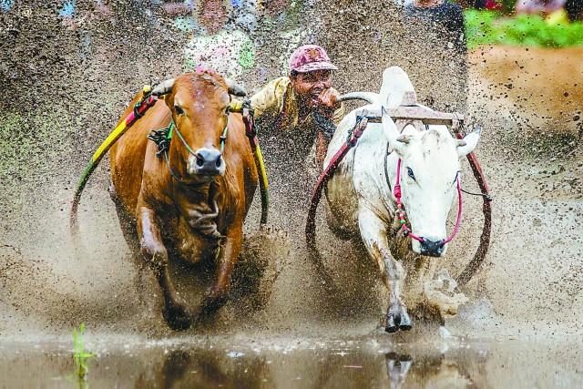 奔牛赛,泥浆里的速度与激情_比赛