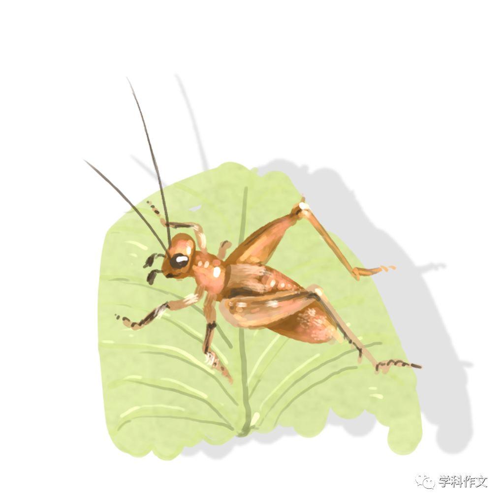 时代广场的蟋蟀读书卡