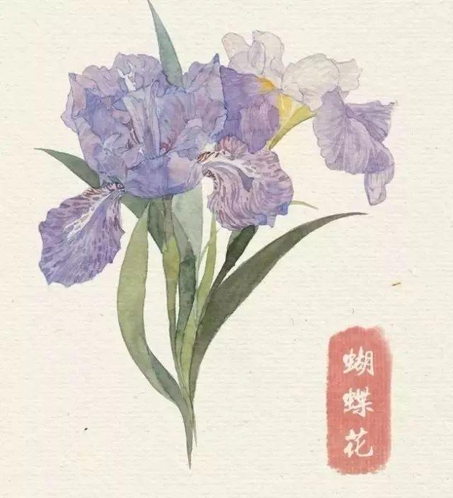 干货 40种水彩花卉临摹素材