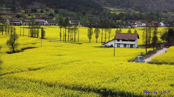 中国最美十大油菜花景点排名