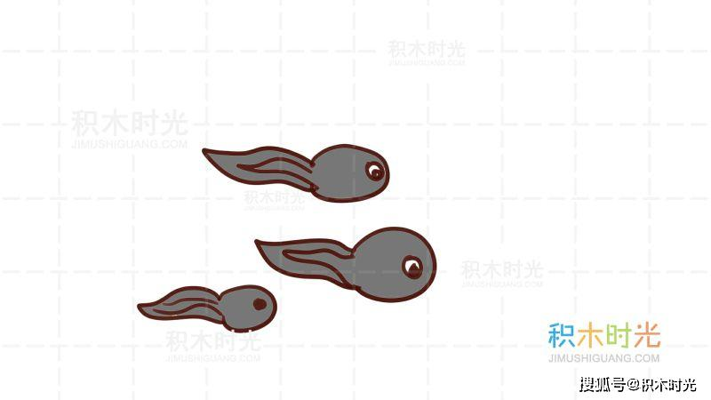 蝌蚪简笔画教程,画蝌蚪简笔画第3种画法   蝌蚪简笔画教程,画蝌蚪简笔画第4种画法   蝌蚪简笔画教程,画蝌蚪简笔画第5种画法   生有侧扁的长尾,头部两侧生有分枝的外鳃,吸附在水草上,靠体内残存的卵黄供给营养.