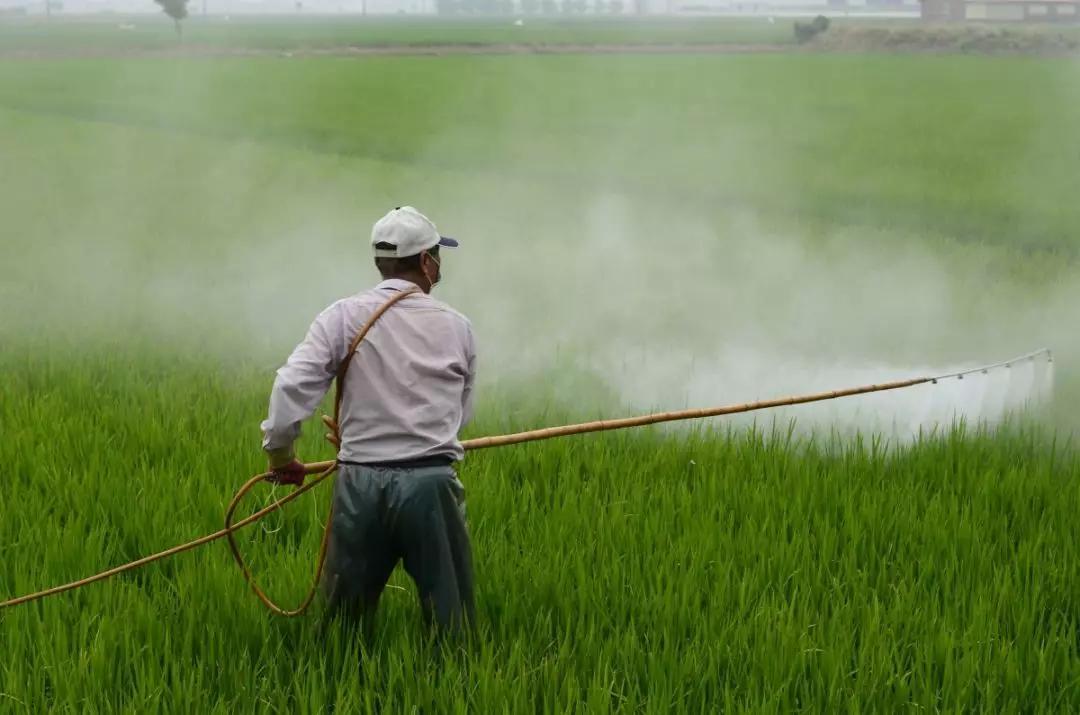 清华博士后下乡十一年,农民会成为一个令人骄傲的职业吗?