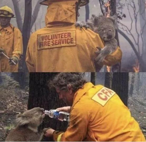 澳大利亚山火有多严重?烧死近5亿动物!