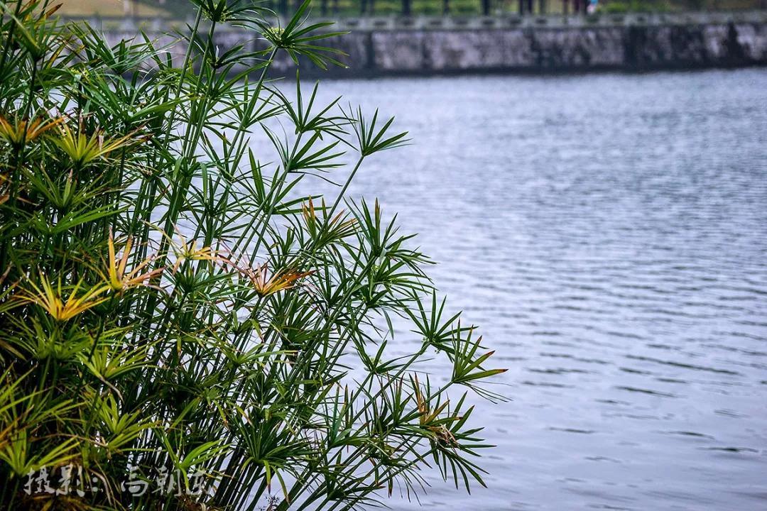 重庆的冬季并不荒凉,雨中的涪陵铜鼓湖湿地公园油润清新,长焦让视觉更独特