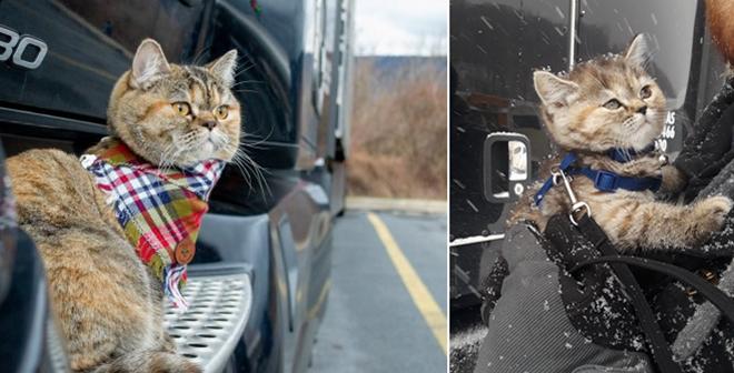 美国一只猫咪和主人游遍美国43个州 Ins粉丝过万