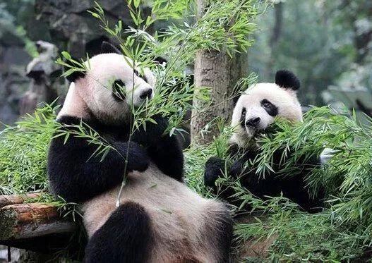 最全熊猫币在这里
