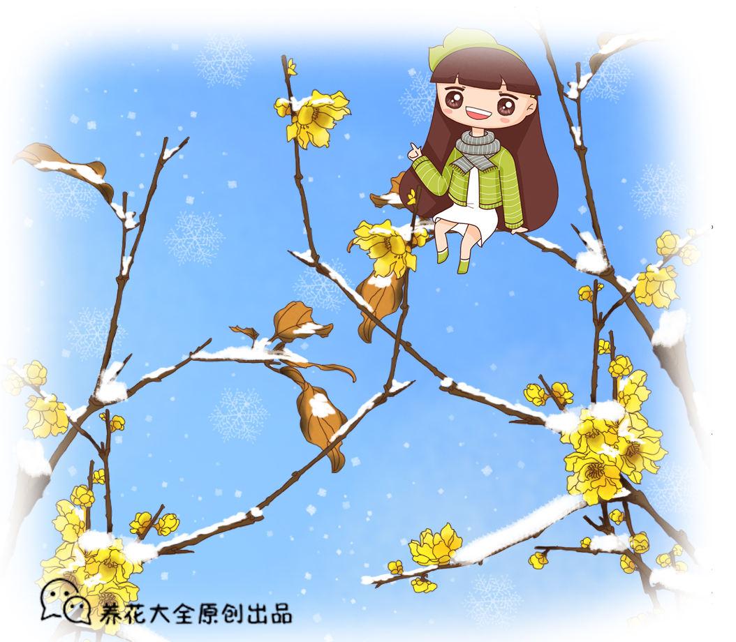 雪天也能开花的腊梅,零下10度照样能活,还是大热的年宵花