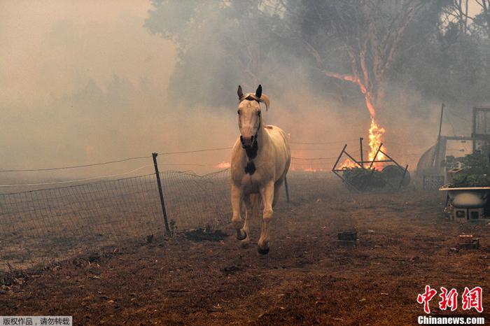 """澳大利亚火情暂缓!山火的""""罪魁祸首""""究竟是谁?"""