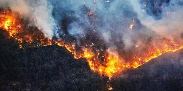 澳大利亞森林大火仍在蔓延 網絡攻擊也仍在繼續?