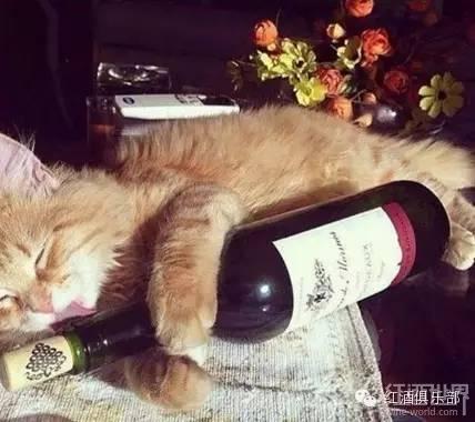 一个葡萄酒爱好者的生活自白