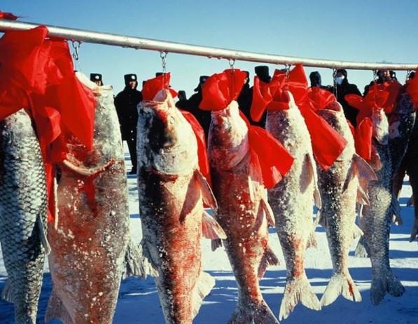 中国最神奇的两个湖,鱼和大闸蟹越捕越多,如今竟成热门旅游项目