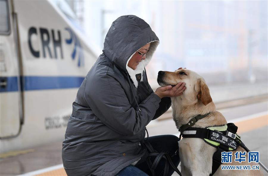導盲犬乘高鐵體驗春運