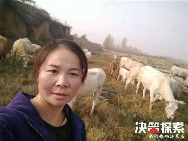 """南召县""""养牛大王""""王加山:好日子""""牛起来"""""""