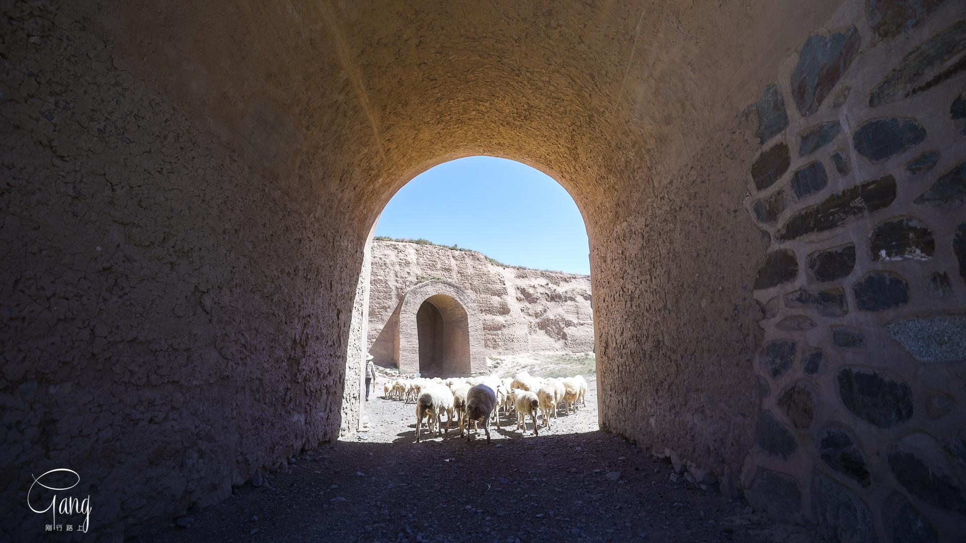 甘肃这个400年历史的边关要塞,如今是全世界最后的大漠龟城