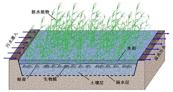 细菌净化污水的原理_细菌卡通图片