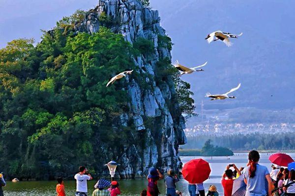 广东推出首期7个观鸟点 带你看漫天飞羽