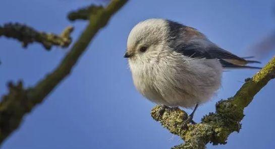 """鸟界的""""肥宅""""都是雀形目的?不一定,猛禽中也有胖萌肥啾"""