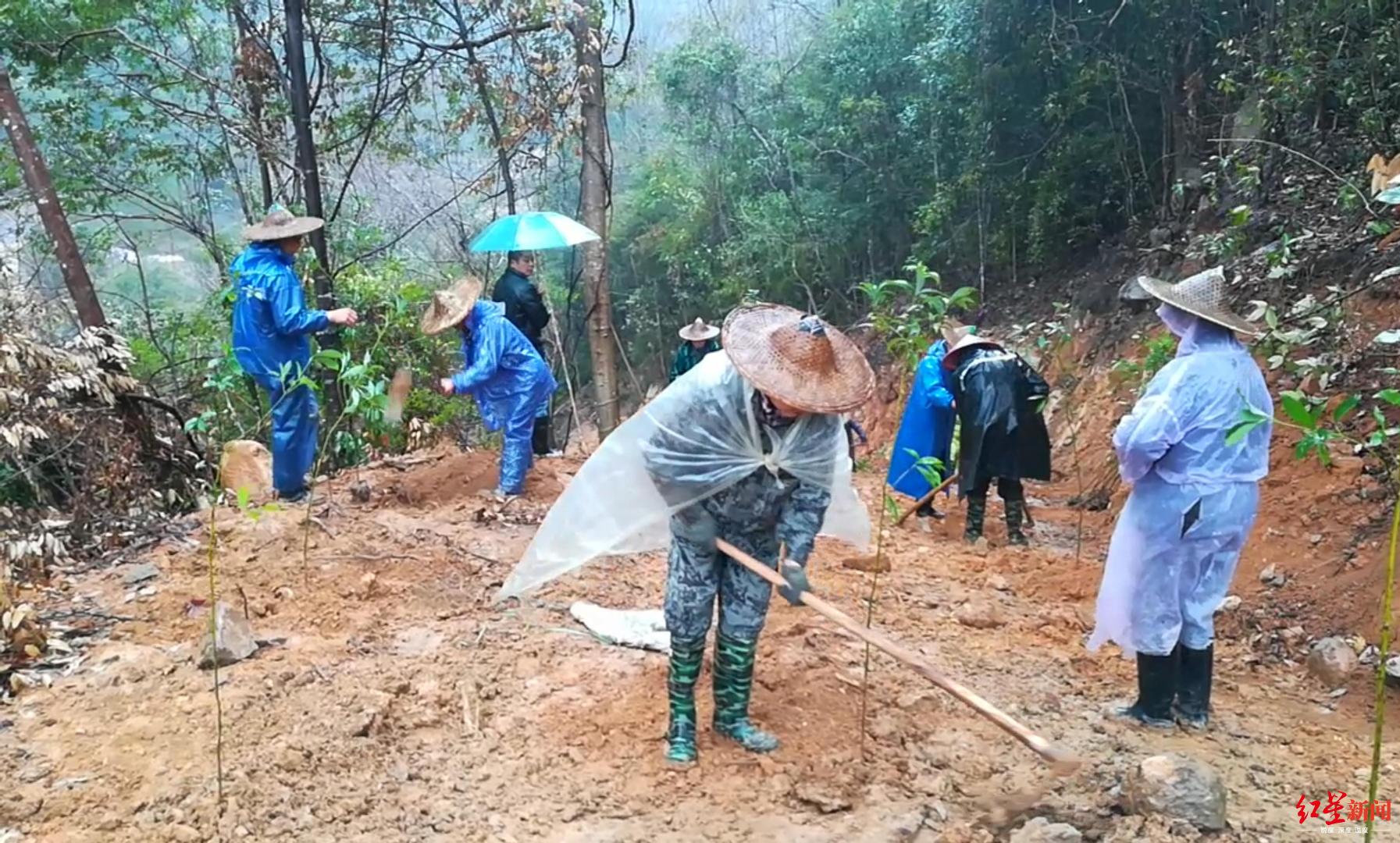 武夷山农夫山泉毁林处正在恢复植被,20多人冒雨植树