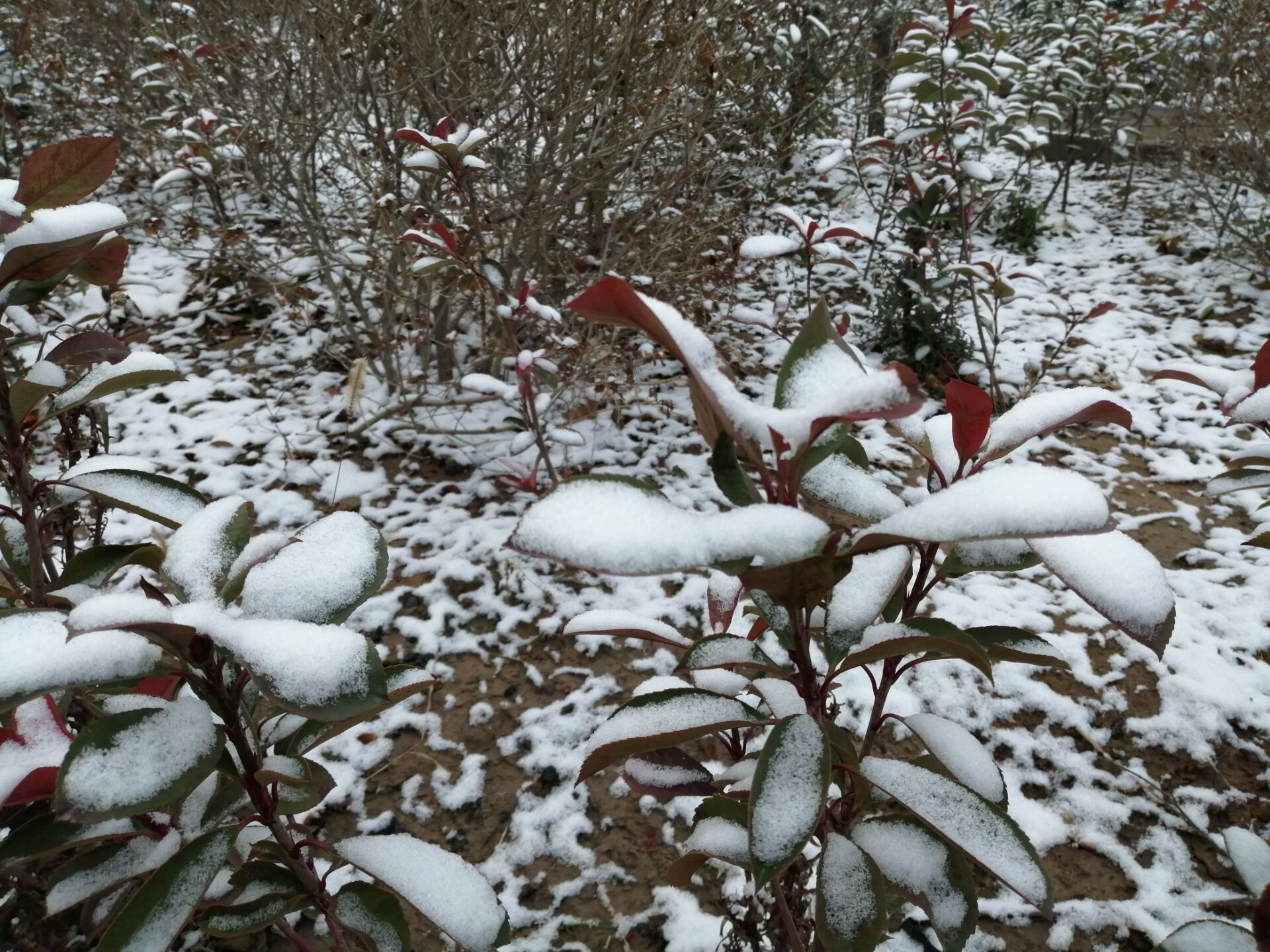 小雪降临郑州!未来几天郑州有大雪吗?