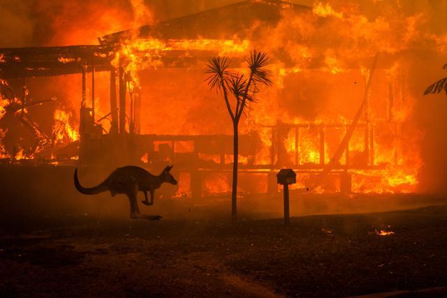 澳大利亚大火会造成多少昆虫灭绝?科学家计算得出:至少700种