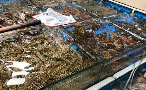 多数海鲜春节涨价,想囤年夜饭食材赶紧出手
