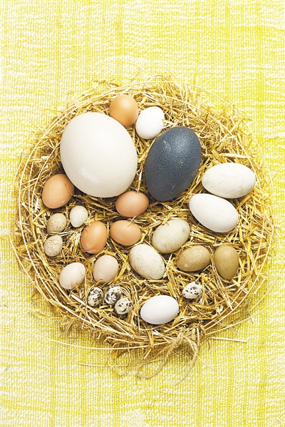 """最新研究显示 为了与大自然斗智斗勇,鸟类创造了""""彩蛋"""""""