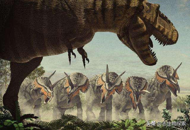 图注:那时候,三角龙们生活在霸王龙的阴影之下,图片来自网络