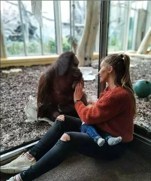到维也纳的美泉宫动物园参观,这只母猩猩叫索尔