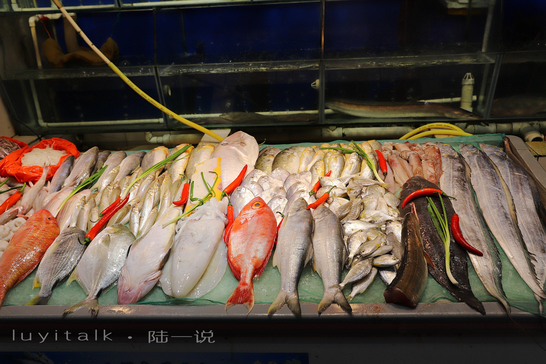 厦门老牌海鲜大排档,一开就是27年,比小眼镜还老,姜母鸭人人爱