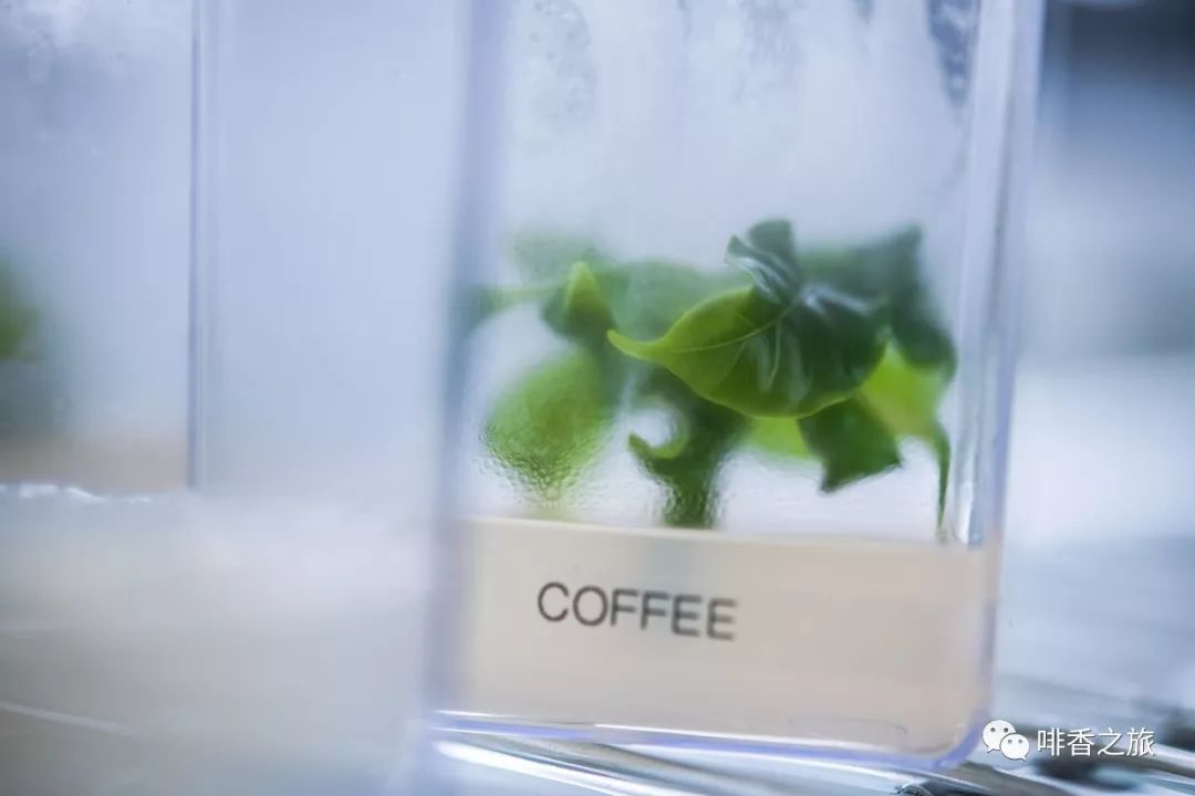 <b>【这次是真的】人类正在向太空运送咖啡</b>